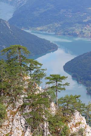 serbia landscape: Pine trees on Tara mountain Serbia landscape