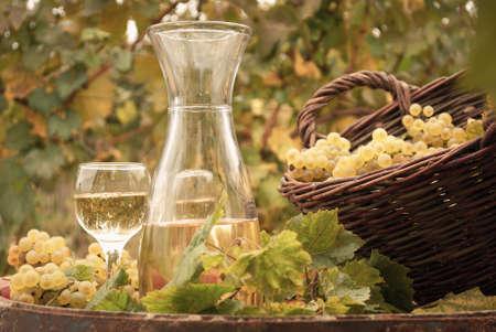 white wine vineyard autumn season Stock Photo