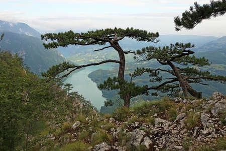 Pine trees on mountain landscape