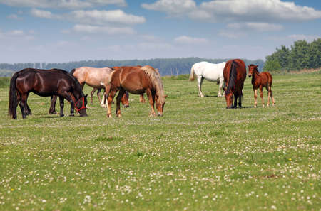 Herd of horses in pasture spring season Stock Photo