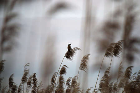 A small bird standing on a cane Stock Photo