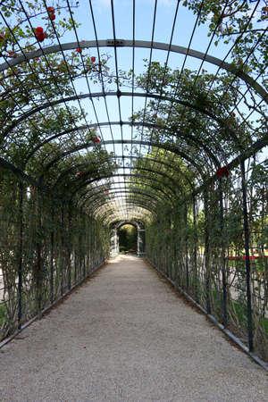 Passage ornate with roses flower arcs park in Vienna Austria