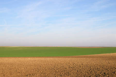 plowed field and young green wheat sunny autumn day agriculture