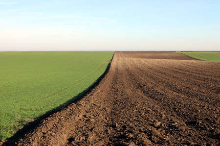 plowed field and young green wheat sunny autumn day landscape agriculture