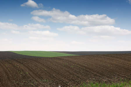 Plowed and green wheat fields in spring agriculture 스톡 콘텐츠