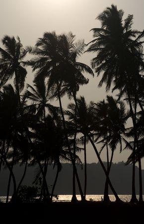 Palms and sunset on the Goa coast in India photo