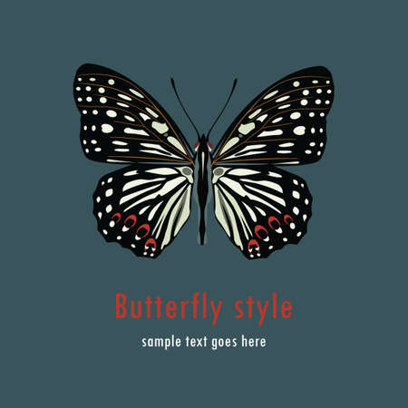 Colorful butterfly on the color background Vector