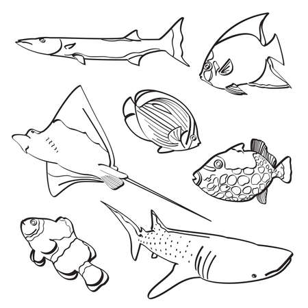 triggerfish: Fishes Collection Illustration