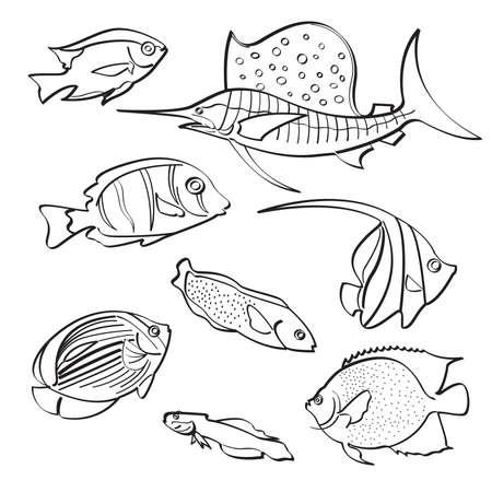 arowana: Fishes Collection Illustration