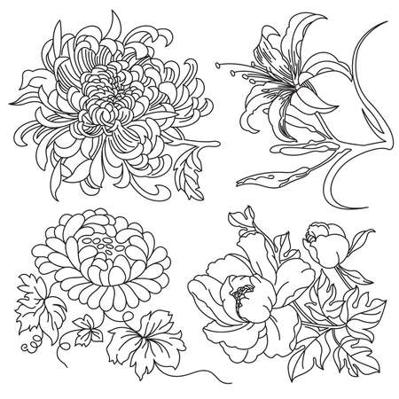camellia: Flowers Collection