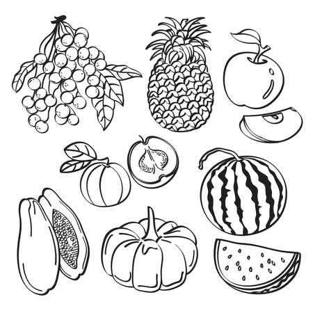 longan: Fruit Set Illustration