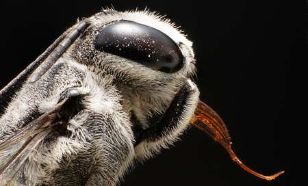 deceased: Ultra Macro Image of a deceased bee Stock Photo