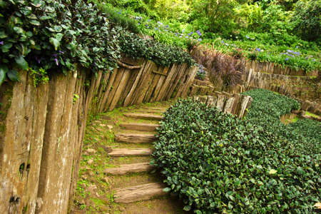Garden path with old wooden fence in the green garden. view of Landscaping the path in the garden. Stock Photo