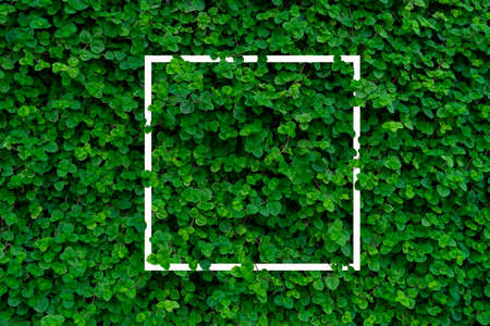 Vertical garden, Green ivy leaves on wall with copy space Reklamní fotografie