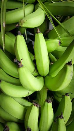 unripened: A heap of green bananas