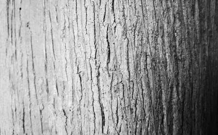 two tone: Two-tone Bark Background