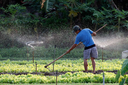 Organic vegetable gardens in Tra Que Village. Farmer digging soil with hoe. Hoi An. Vietnam. Stock fotó