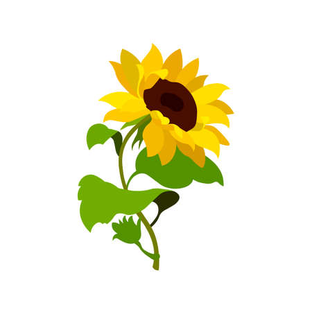 Sunflower flower nature summer spring beautiful garden Ilustracja