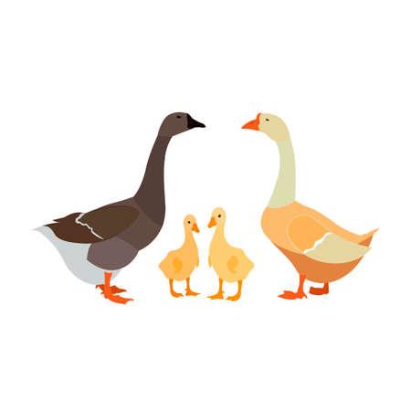 gander goose gosling white farm family