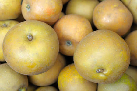 Closeup of dull gold Egremont Russet dessert apples Stock Photo - 4649429