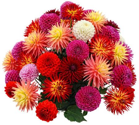 dalia: Arreglos florales de crisantemos y dalias Foto de archivo