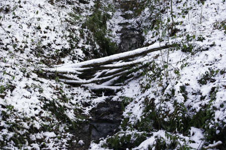 bridged: Bed of a stream, bridged by fallen branches, in the snow