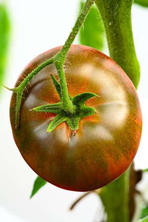 russian food: Black Krim -- Ukrainian heirloom tomato originating from Crimea region of Black Sea Stock Photo