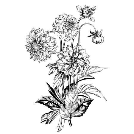 Vintage elegant flowers. Black and white vector illustration. Dahlias flowers. Botany. Vector