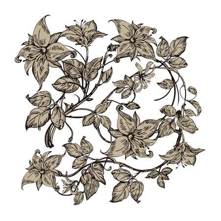 Vintage elegant flowers black and white vector illustration vintage elegant flowers black and white vector illustration honeysuckle flower botany vector mightylinksfo