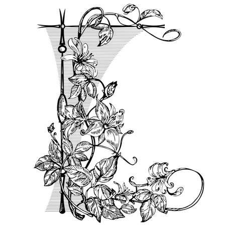 Vintage elegant flowers. Black and white vector illustration. Honeysuckle flower. Botany. Vector
