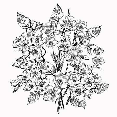 Jasmine flower. Vintage elegant flowers. Black and white vector illustration. Botany. Vector Vettoriali