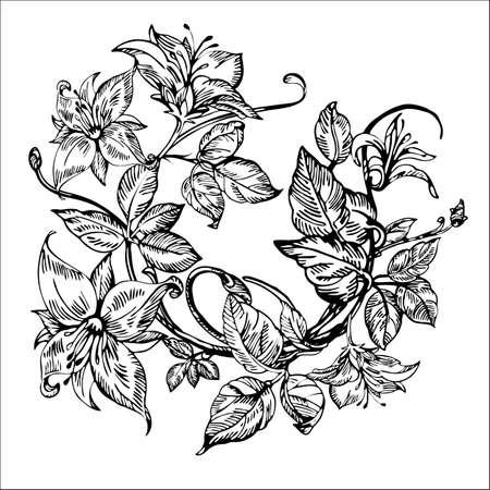 honeysuckle: Vintage elegant flowers. Black and white vector illustration. Honeysuckle flower. Botany. Vector