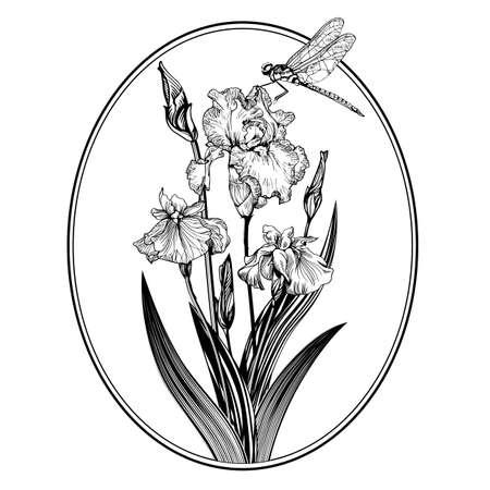 Vintage elegant flowers. Black and white vector illustration. Iris flower. Illustration