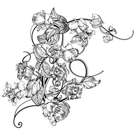 kobe: Vintage elegant flowers. Black and white vector illustration. Kobe flower. Botany. Vector Illustration