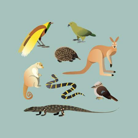 Vector Set Of Different Australian Animals. Animals of Australian Kangaroo Echidna, Couscous, Australian giant lizard, mangrove snake, parrot Kea, Laughing Kingfisher, Big bird of paradise. Vector