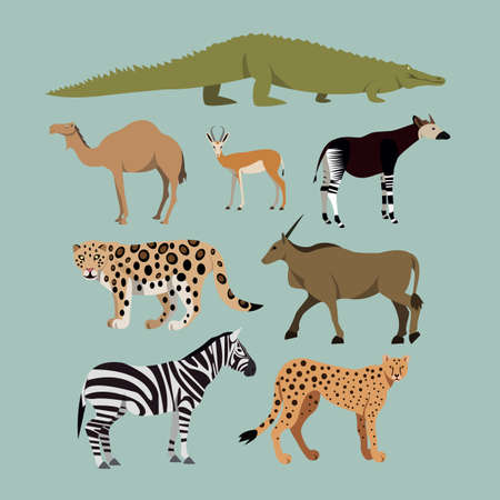 Vector Set Of Different African Animals. Animals of the African savanna Dromedary camel, crocodile, leopard, Okapi, Cheetah, Canna, Zebra, Springbok. Vector