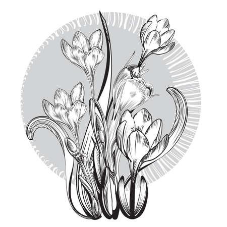 sunflower drawing: Vintage elegant flowers. Black and white vector illustration for your works. Botany.