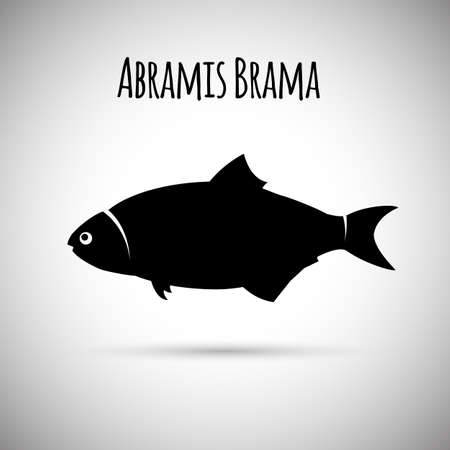common carp: Abramis brama fish