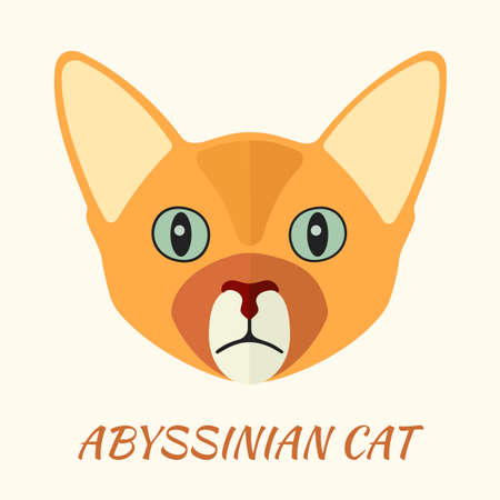 Abyssinian purebred cat portrait vector illustration in flat style.