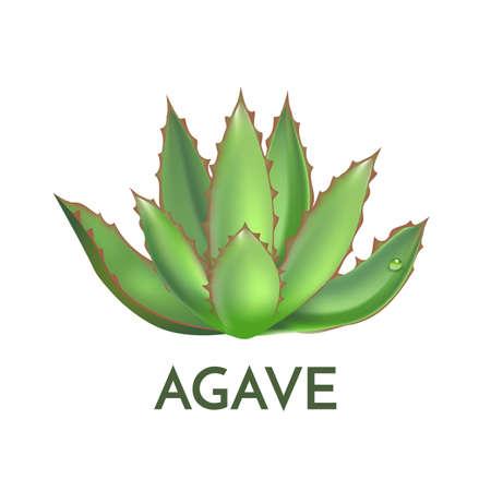 リュウゼツランの植物緑花ロゴ カラフルなベクトル図、記号セット  イラスト・ベクター素材