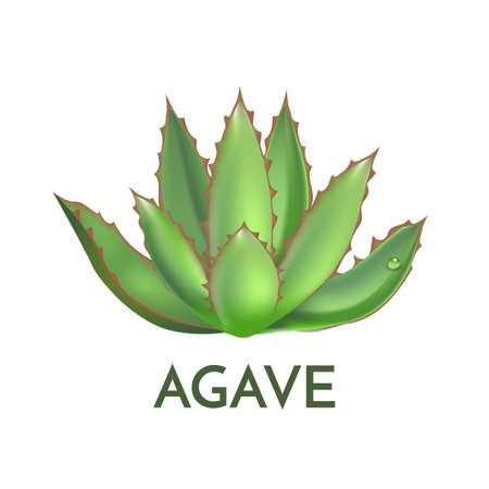 Agave plant green flower logo colorful vector illustration, symbol set Illustration