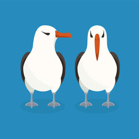 albatross: Two albatrosses are sitting next to each other. Colorful vector flat illustration.