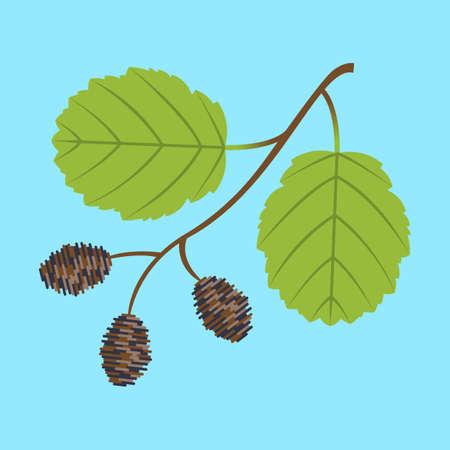 alder: Alder twig with branch leaves and cones. Colorful vector flat illustration.
