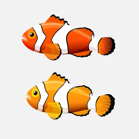 whose: Anemone fish isolated on white. Clownfish or anemonefish are fishes whose habitat usually is a coral reefs. Yellow and orange color species with white bars or patches. Aquarium. Vector illustration
