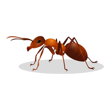 antennae: Brown ant isolated on white. Insect icon. Termite. Eusocial insect. Brown animal insect creature with elbowed antennae and t distinctive node-like structure that forms their slender waists. Vector