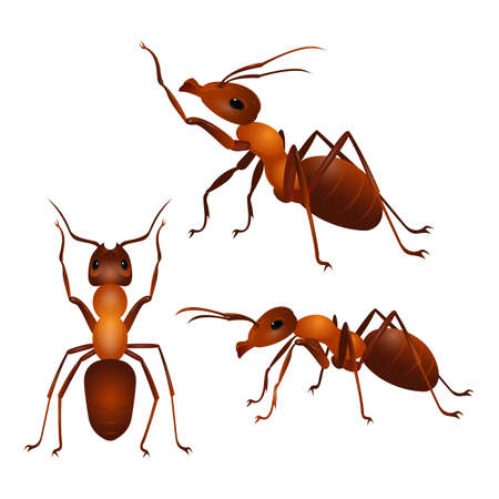 Brown ants isolated on white. Insect icon. Termite. Eusocial insect. Brown animal insect creature with elbowed antennae and t distinctive node-like structure that forms their slender waists. Vector Illustration