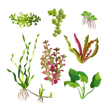 ocean plants: Aquarium plants set. Cartoon underwater algae. Seaweed natural elements. Decoration grass for fish tanks and terrariums. Ocean flora. Aquatic life. Branches and leaves. Vector illustration Illustration