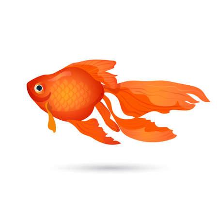 Goldfish isolated on white. Small red aquarium fish. Aquatic realistic character, tank habitat. Underwater goldenfish in flat style design. Elegant home pet. Freshwater fish of carp family. Vector