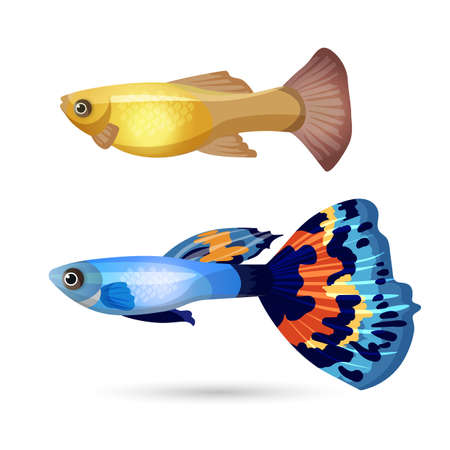 poecilia: Fish Poecilia reticulata and carp isolated on white. Blue fish with colorful tail and yellow aquarium fish. Underwater pets, realistic characters. Create your aquarium with editable elements. Vector Illustration