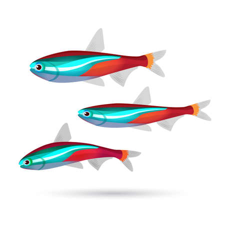 red fish: Tropical aquarium fish on white background. Set of three colorful fish of blue, gray, red and white colors. Neon. Cartoon marine inhabitants. Bright aquarium characters. Underwater animals. Vector Illustration